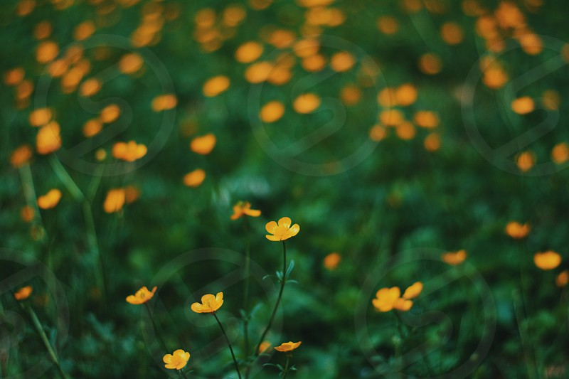 photography of yellow and green petaled flower photo