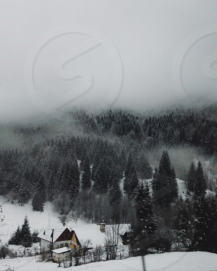 Foggy wood photo