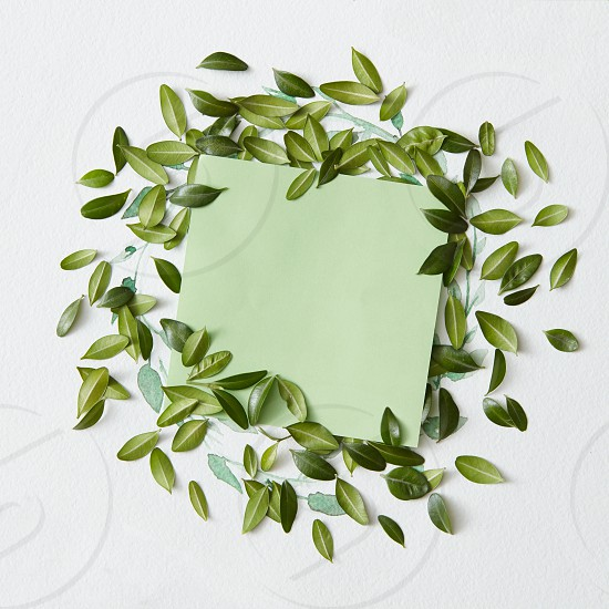 Blank sheet of paper with green leaves around on white background photo