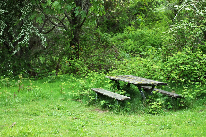 Forgotten picnic table photo