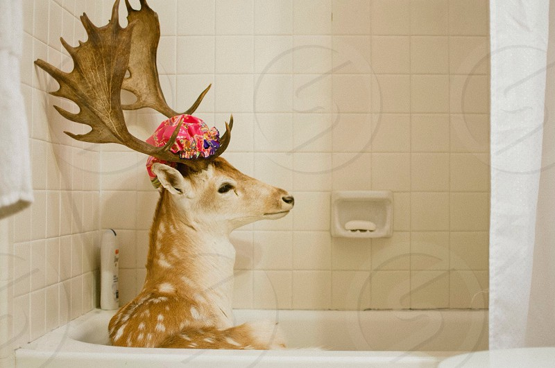 deer taking bath on bathtub animal photography  photo
