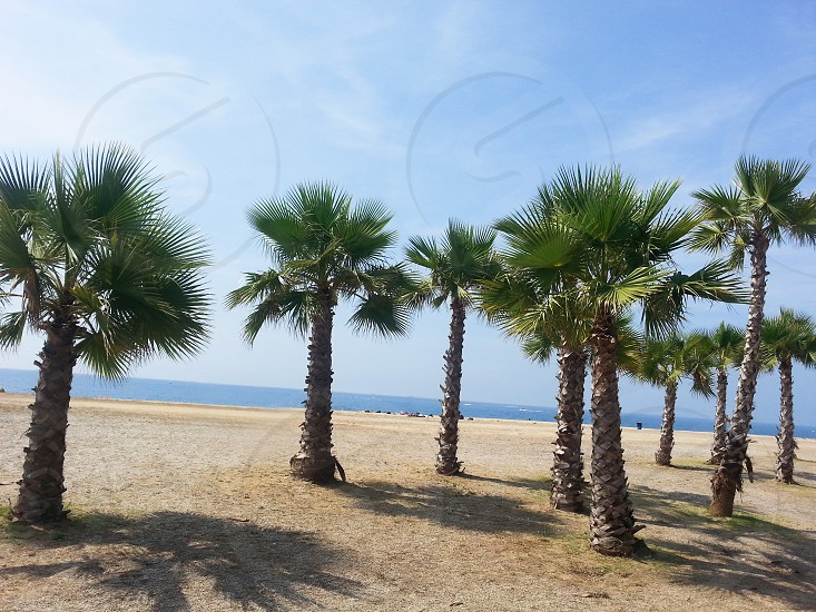Palm-trees near the beach in Spain photo