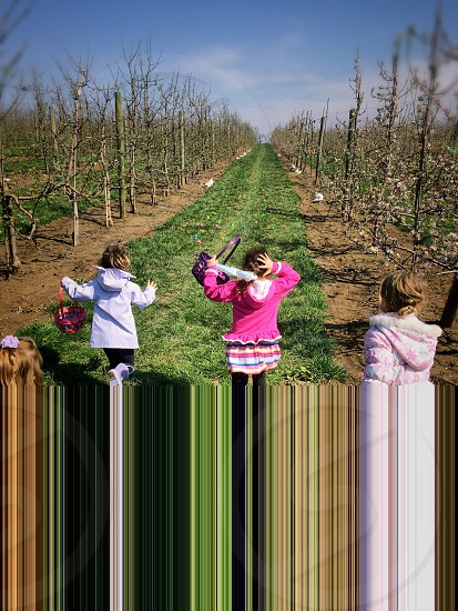 Girls running toward colored plastic eggs at the start of an Easter Egg Hunt competition photo