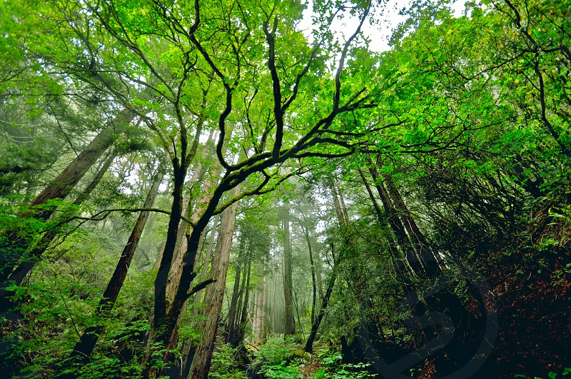 Bolinas Tree Marin County photo