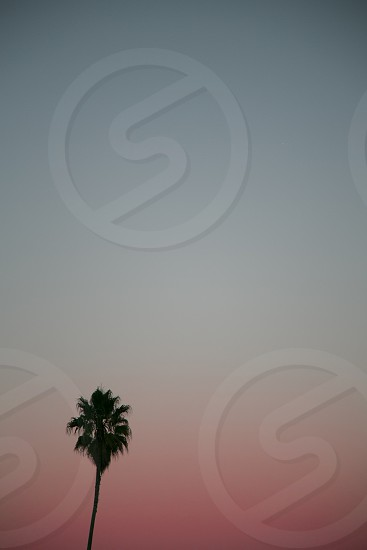 Palm Tree Sunset SF California Miami Vice Lonely. photo