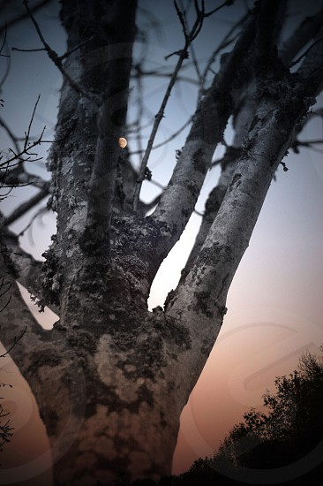grey leafless tree photo