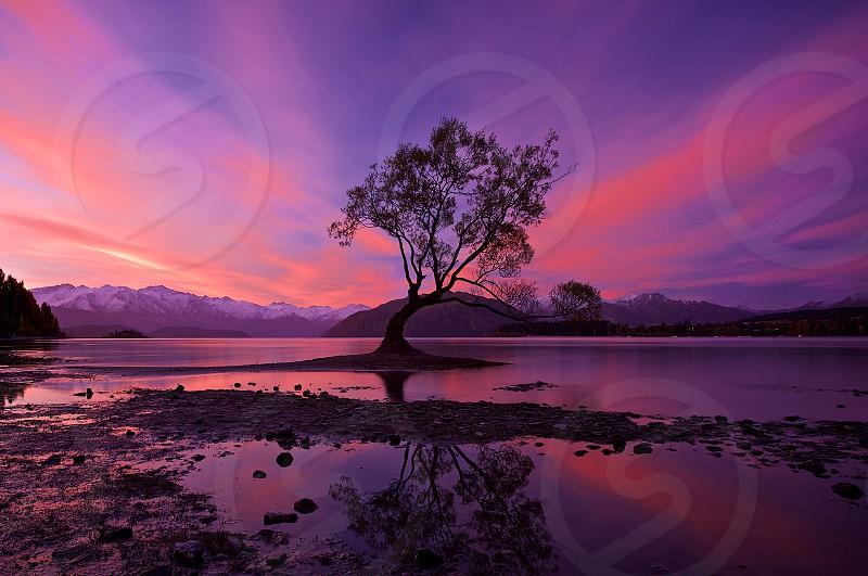 The famous Wanaka tree and an amazing sunset New Zealand.  photo