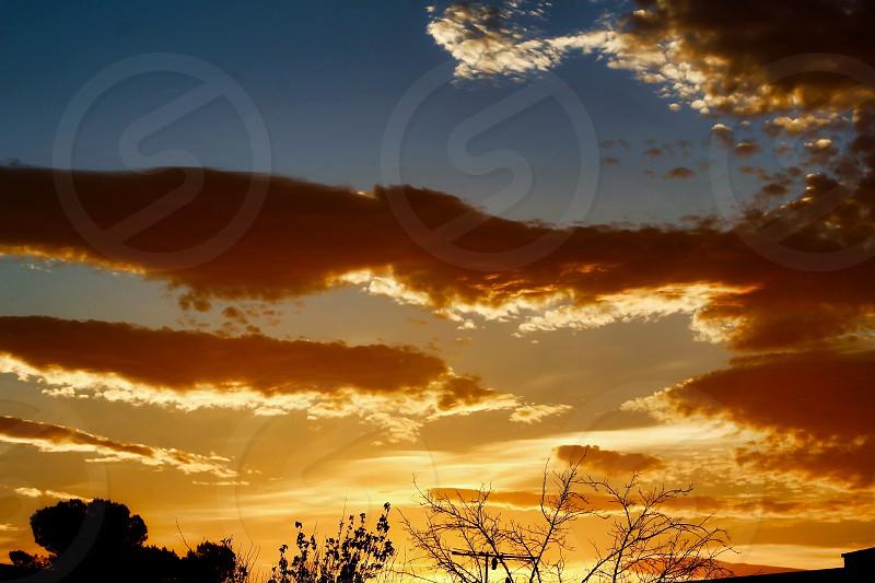 Morning Sunshine  photo