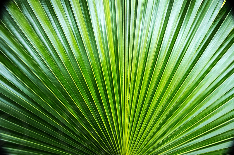 A green palm photo