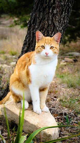 Cat orange photo