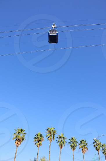 blue tram over palm trees photo