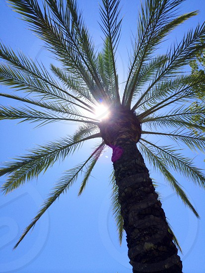 low-angle photography of green palm tree under blue sky photo