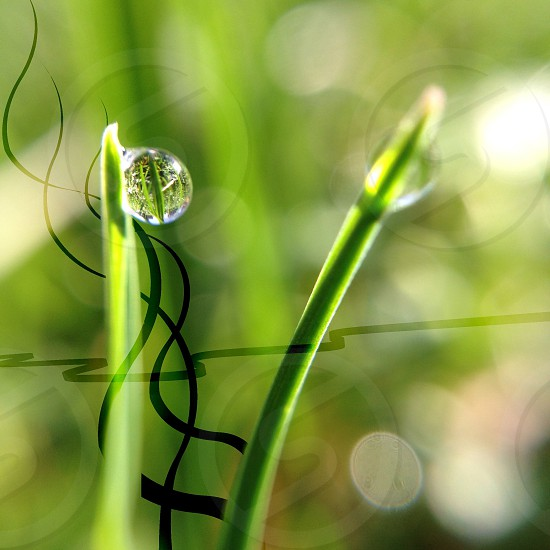 water droplet on blade of grass photo