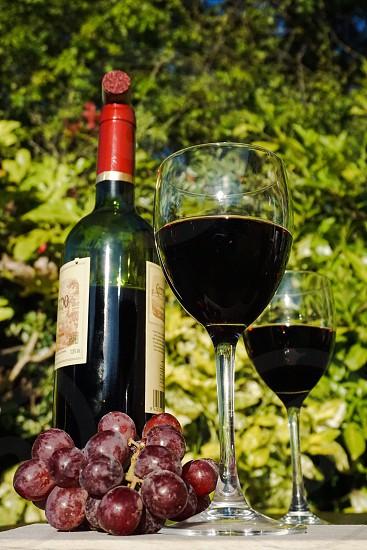 Verticalwinealcoholic drinkalcoholliquordrinkglassbotanicalsdrinkingliquidwinebeverages photo
