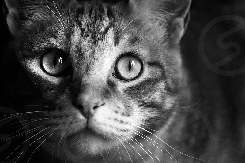 Animals cats cat animals black and white photo