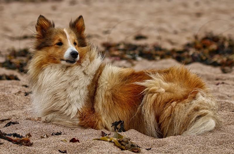 Dog sat on a beach photo