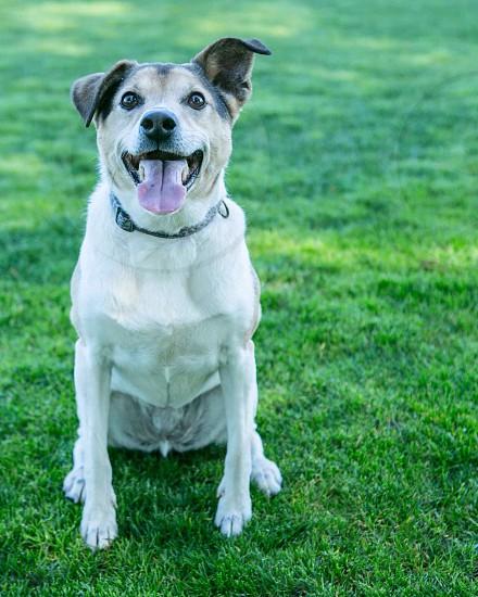 Happiest dog photo