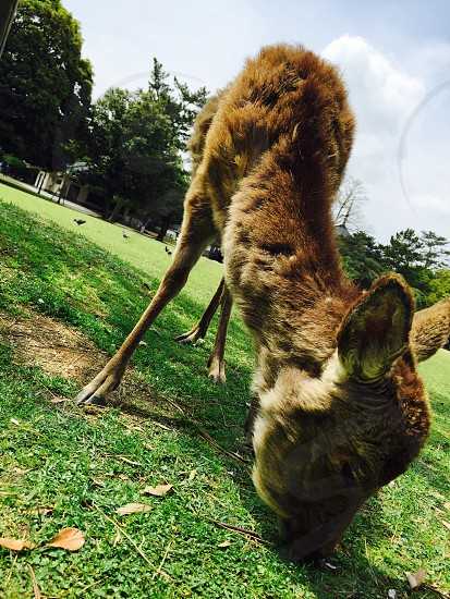 deer park  photo