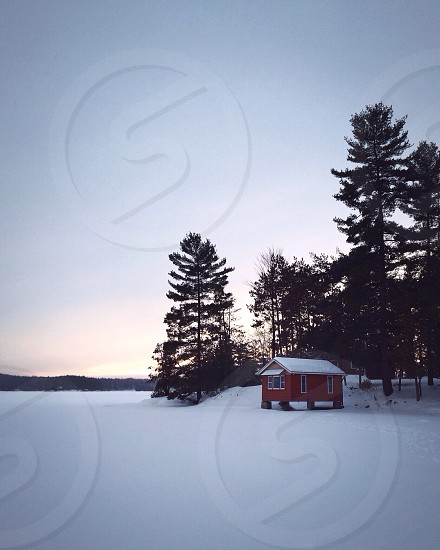 red and white wooden house and pine trees on snowy road photo