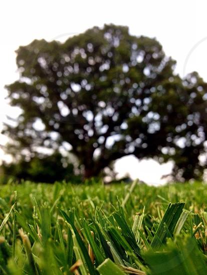 large tree on green grassy field photo