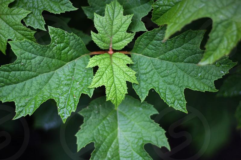 green leaf eco environment fractal enviro leaves oak life forest plants woodland photo