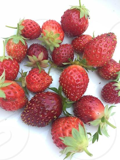 Fresh organic strawberries  photo