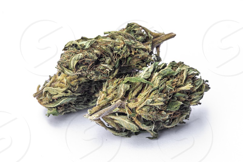 Detail of legal marijuana flowers photographed on white background photo