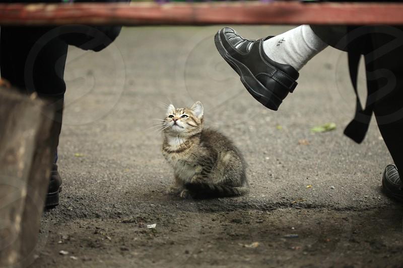 small cat photo