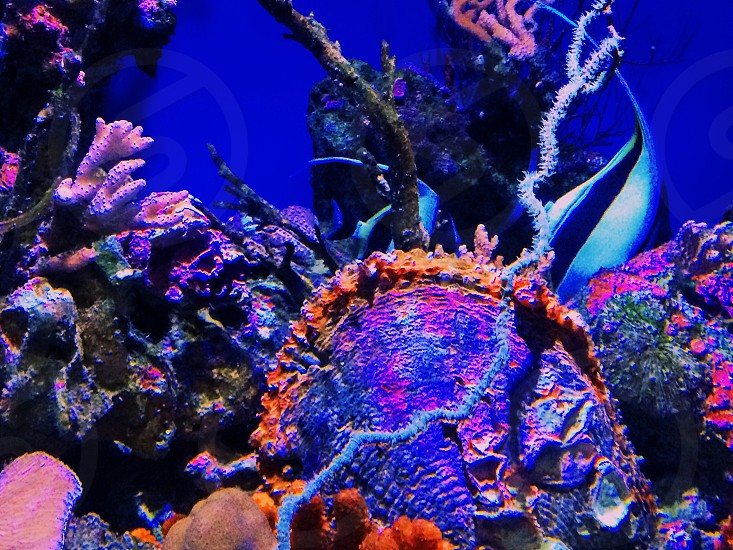 Ocean sea neon coral plant nature  photo
