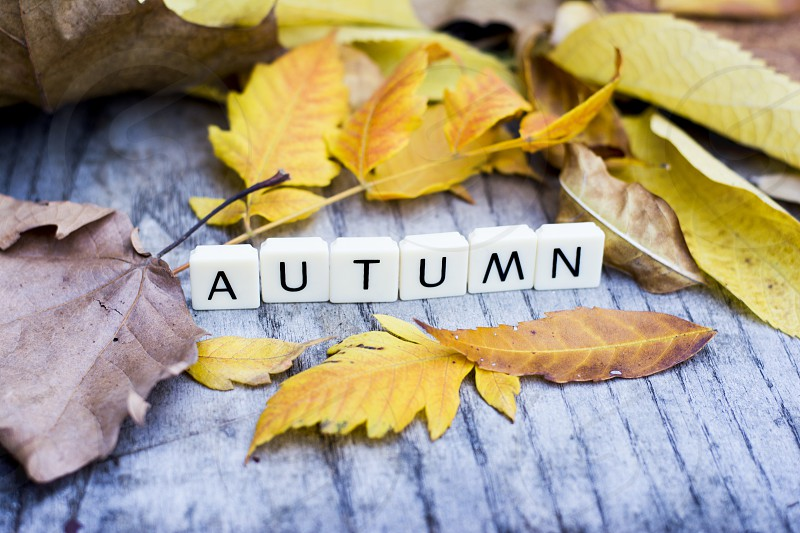 Word autumn made of letters among colorful autumn leaves on wooden background photo