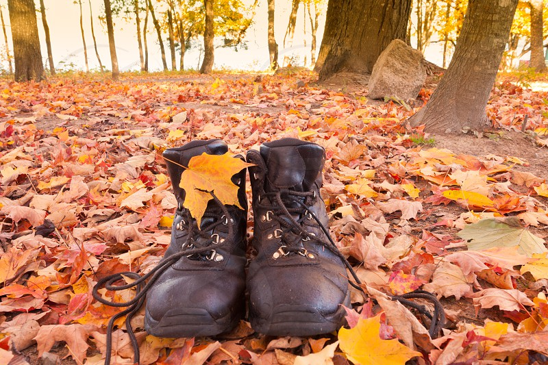Leather hiking boots in yellow orange fall colored autumn forest ready to go on a hike photo