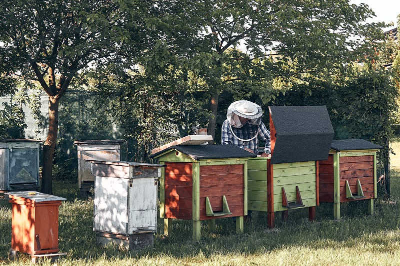 Beekeeper working in apiary. Real people authentic situations photo
