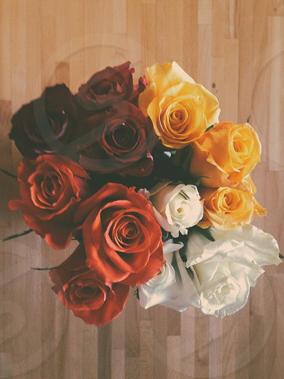red yellow brown and white roses photo