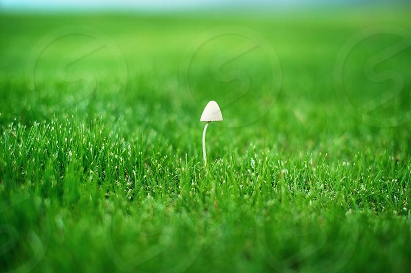 white mushroom photo