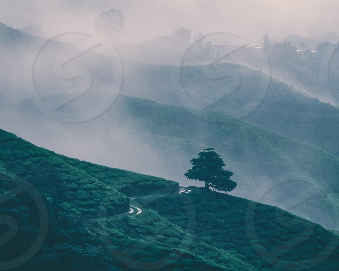 A misty morning right after sunrise in Cameron Highlands Malaysia.  photo