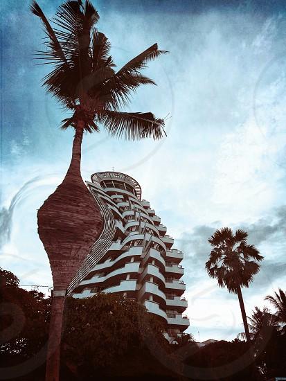 Giant Coconut tree destroys building  photo