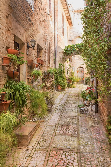 View from oblique of an old street decorated with many pots of plants and flowers. Spello. Umbria Italy. photo