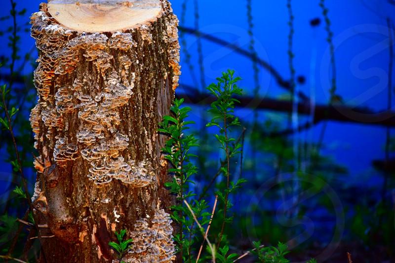 night time stump by lake photo