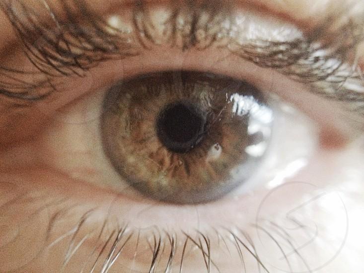 Brown eye macro photo