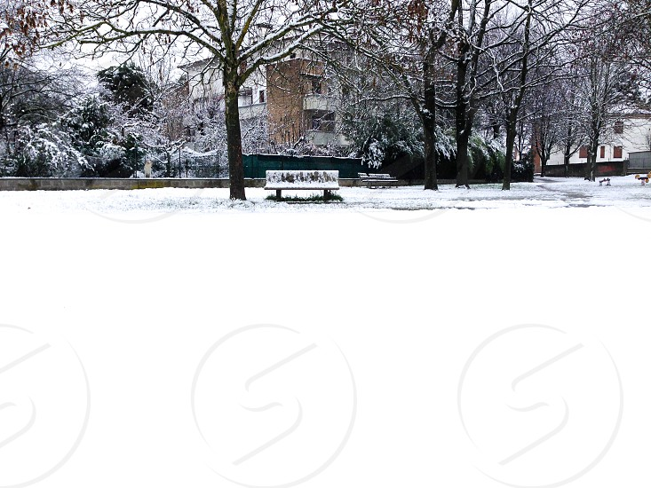 snow covered bench and trees photo