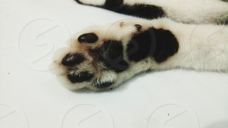 paw of a fluffy cute pet dog photo