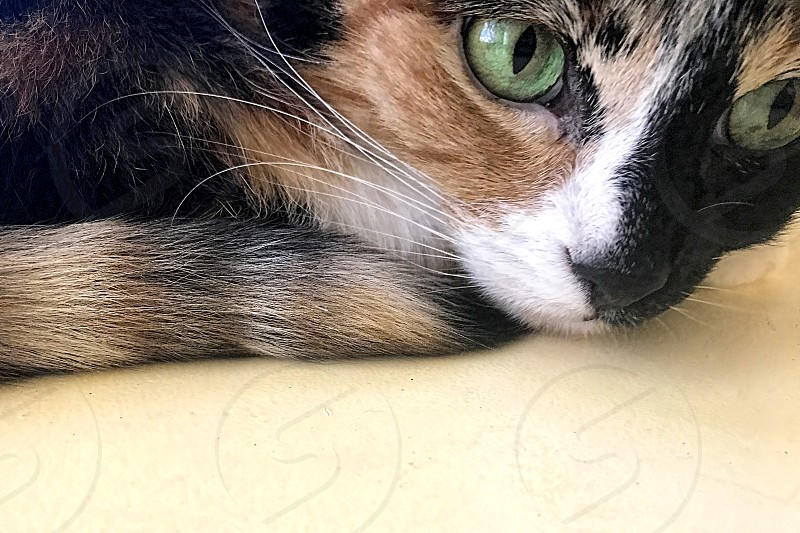 Green-eyed cat in close up shot photo