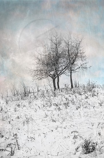 snow covered field photo