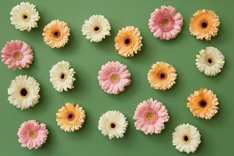 pattern from colorful gerbera on a green background. Minimal spring concept. Flat lay. photo