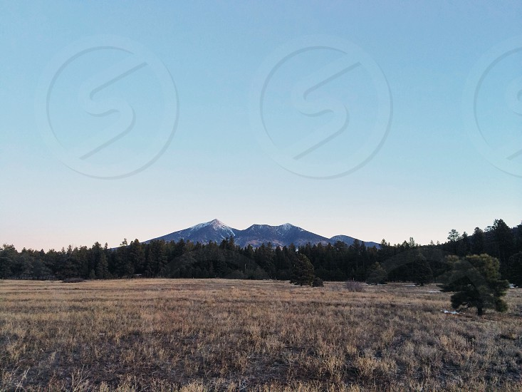 mountain pine forest photo  photo