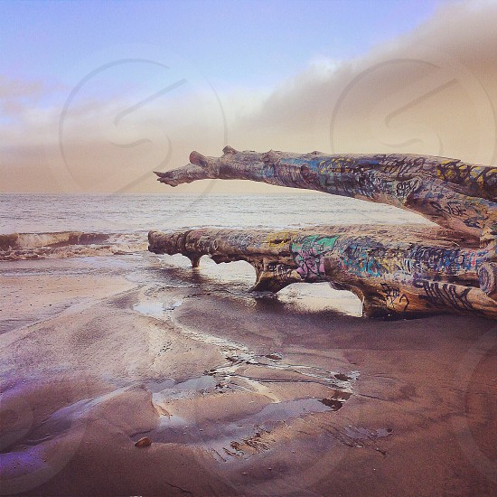 eroded tree on sand by water photo