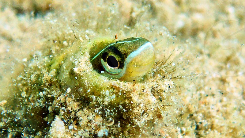 Small cute fish in Red sea Eilat Israel.                     photo