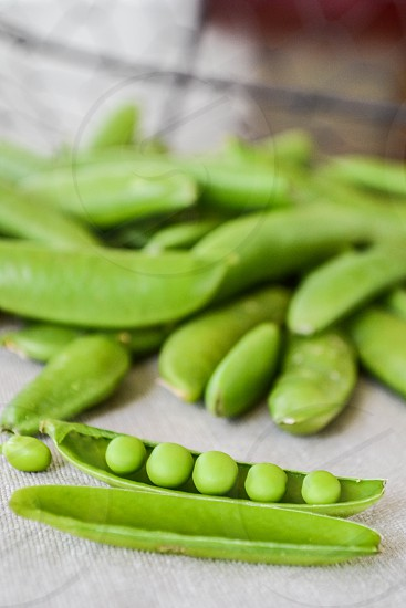 sugar snap peas all in a row photo