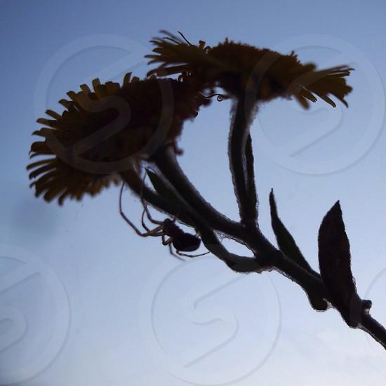 Spider shadow silhouette plant macro photo