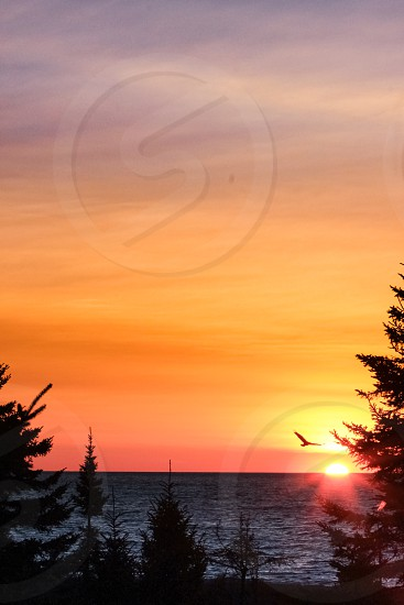 sunrise sun sky horizon morning red orange yellow blue bird eagle silhouette fly flying gliding soaring tree coniferous pine evergreen lake water waves Lake Superior Two Harbors Minnesota photo